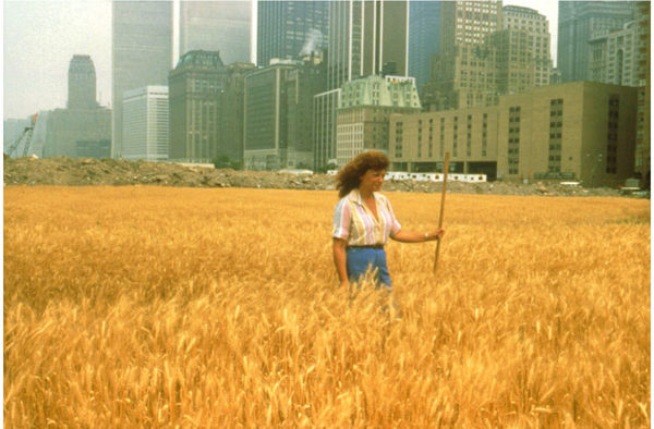 Wheatfield, A Confrontation